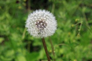 desensibilisation-pollens