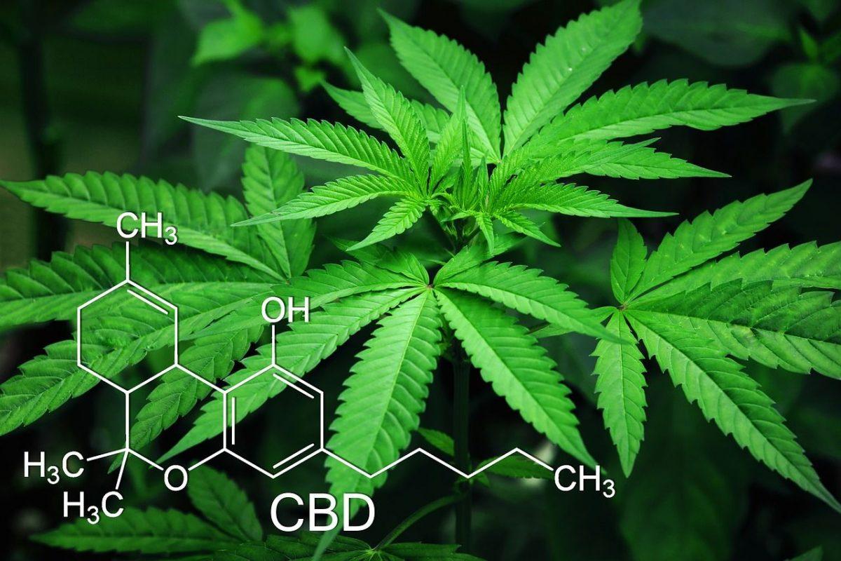 Quelles sont les vertus du cannabis thérapeutique ?